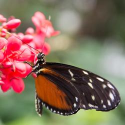 Dream of butterflies instead