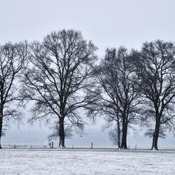 wintersilouet