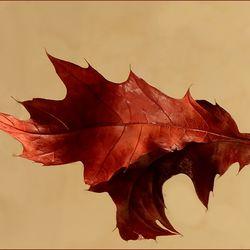 Herfstblad.