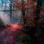 Bos mist en zon