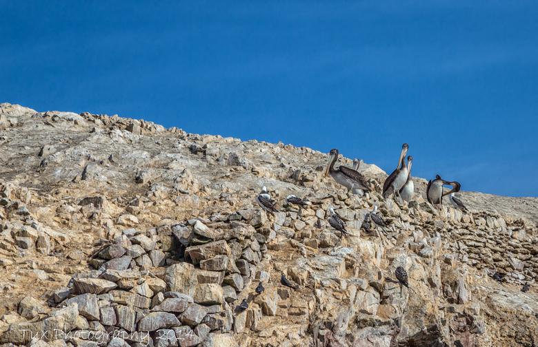 Islas Ballestas (Peru) - Tijdens mijn reis door Peru hebben we ook een boottocht gemaakt langs de Ballestas eilanden. Deze eilanden liggen een stuk va
