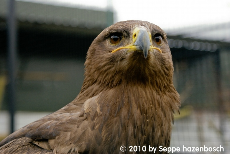 Roofvogel -