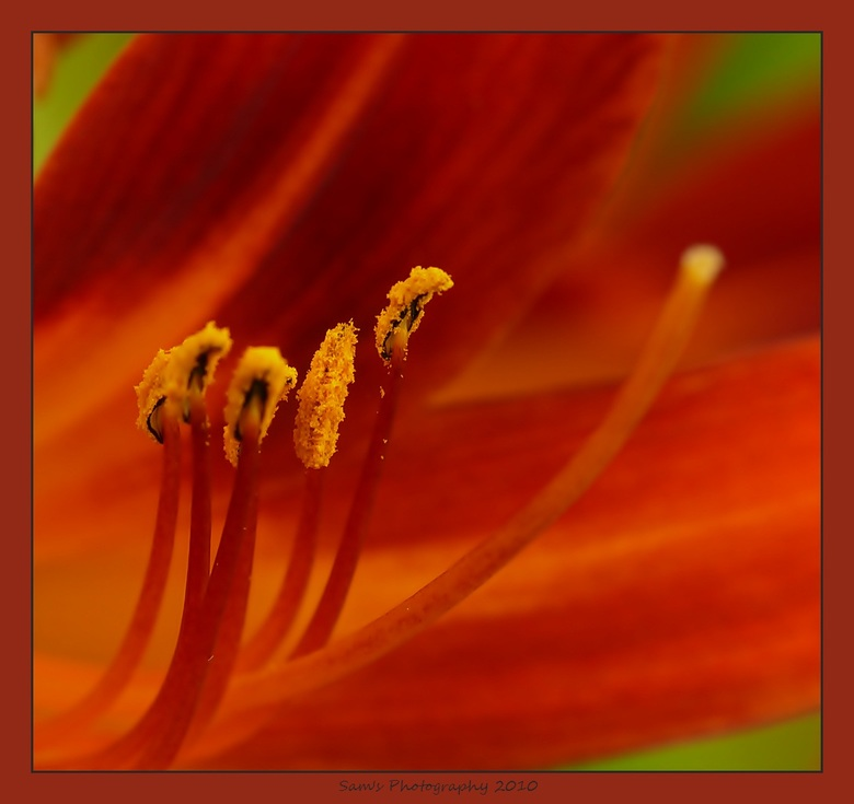 """Ik vind... - de kleuren gewoon prachtig (weet de naam helaas niet van deze bloem)   <img  src=""""/images/smileys/wilt.png""""/><br /> <br /> Gr. Sandra"""