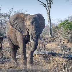 Olifanten spotten in Zuid-Afrika