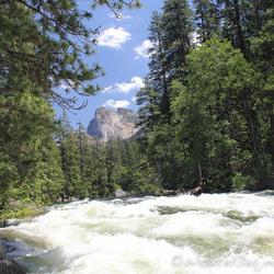 Beautiful Wildlife in Yosemite