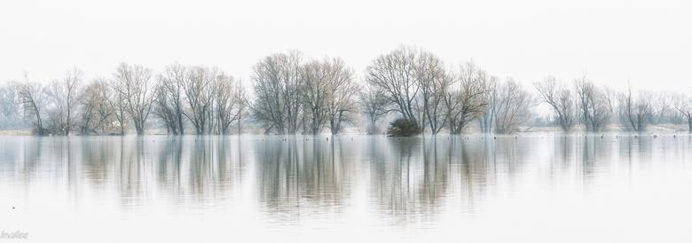 hoog water bij de Waal (2018) - Januari 2018, hoog water in de uiterwaarden van de Waal. (Echteld) Dank voor alle aardige reacties op mijn vorige foto