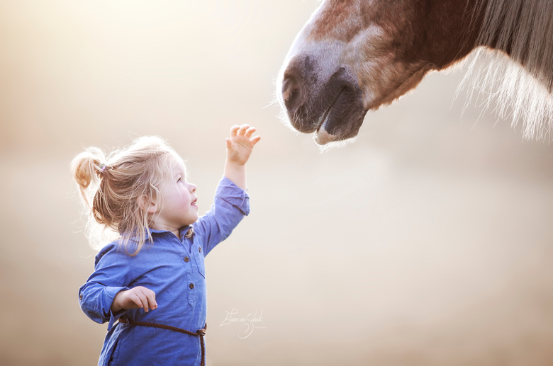 child meets horse