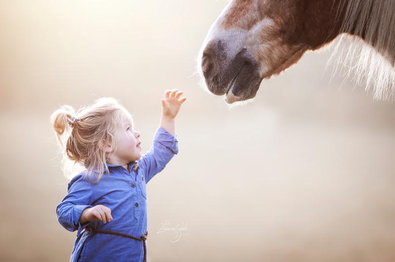 child meets horse