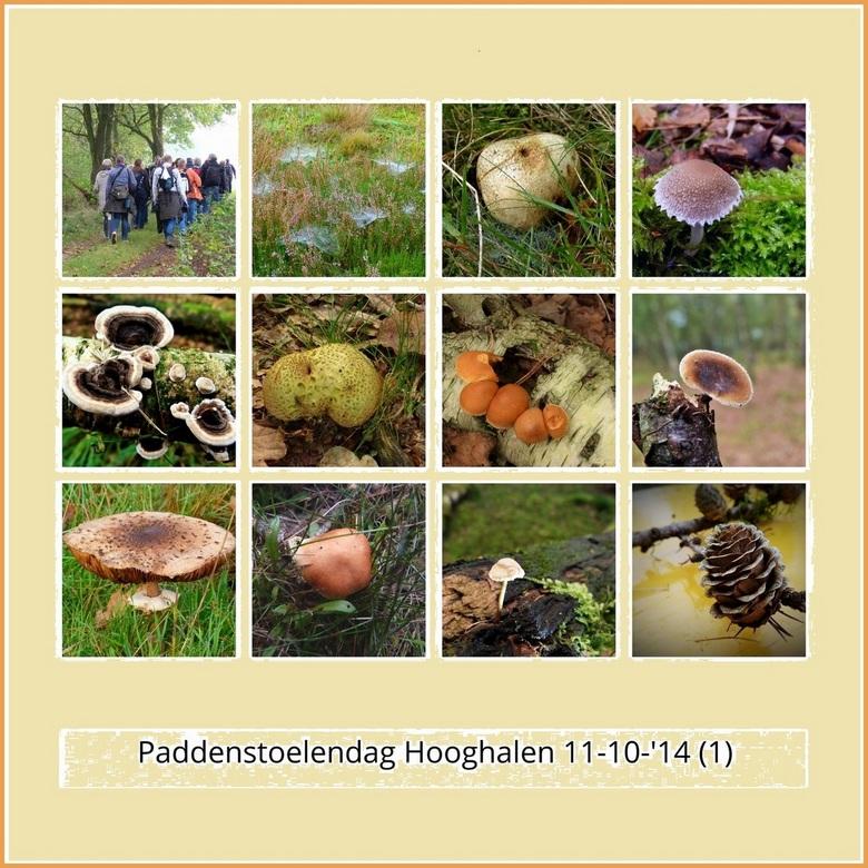 paddenstoelendag Hooghalen.jpg - paddenstoelendag , op 11 oktober 2014, in de bossen bij Hooghalen.