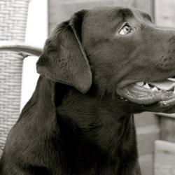Zo puppie, en zó een reus.