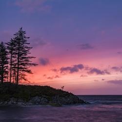 Purple Night!