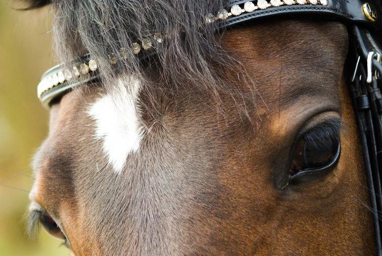 Blik van een paard