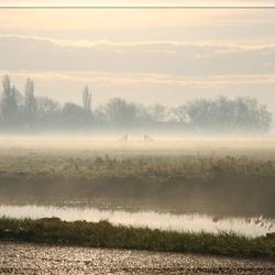 Polder mist ...3