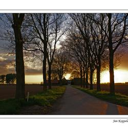 Biesbosch tegenlicht