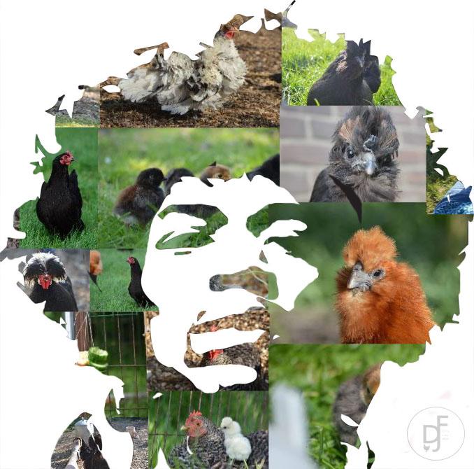 kippiehendrix - Mijn kippen én mijn held Jimi Hendrix