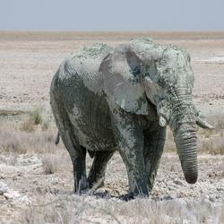 Namibië 159