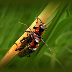 Bugs Love