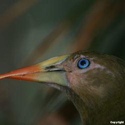 Wat is de naam van deze Vogel !!