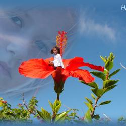 Ashley bloem