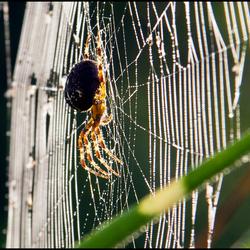 spininweb