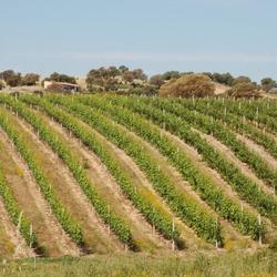 Wijn uit Sardinie
