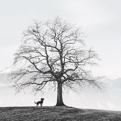 The dog and the tree