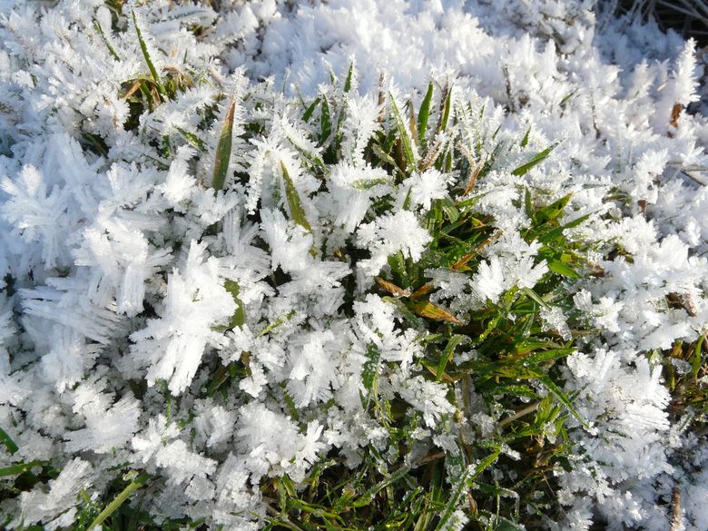 """Rijp op het gras - De rijp op het gras, mooie fractals in de natuur <img  src=""""/images/smileys/wilt.png""""/>"""