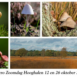 Macro zoomdag Hooghalen