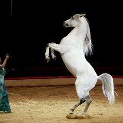 Het paarde meisje