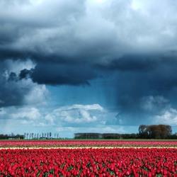 Een veld vol bloemen