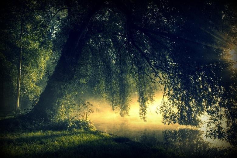 The weeping willow - De oude wilg aan de rand van het voormalige en inmiddels vergane openbare zwembad van Sassenheim.