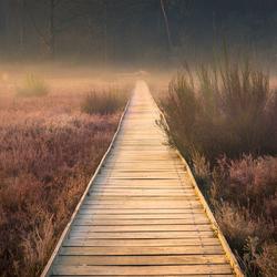 wonder-footpath