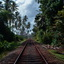 Spoor midden in de natuur van Sri Lanka!