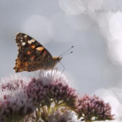 Vlinder aan de waterkant