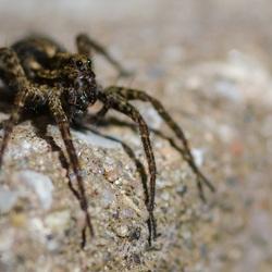 Arachnofobie 2