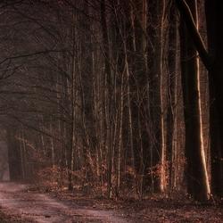 Pathway Trees