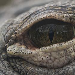 Het oog van een killer