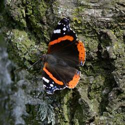 Zonnende vlinder