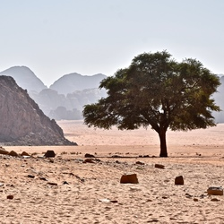 Lonely Tree in the Desert.