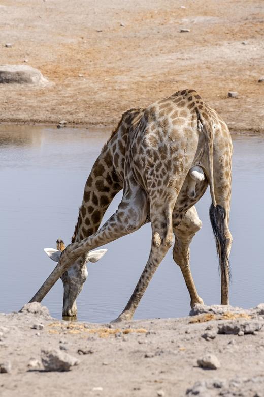 Namibië 151 - Typische een mannetje.....