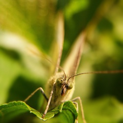 Vlinder.