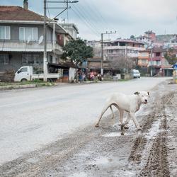 straathond Istanbul