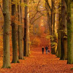 Herfst boswandeling