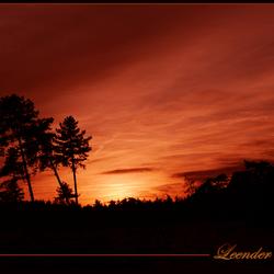 Leender Heide
