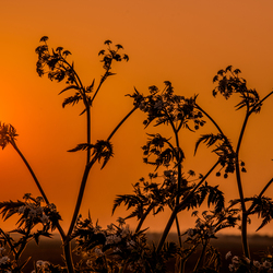 Savannah Sunset in de polder