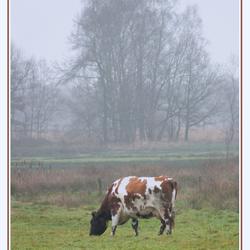 1e kerstdag in Twente