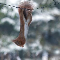 Hanging on.....