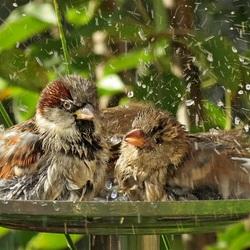 Gezellig samen in bad