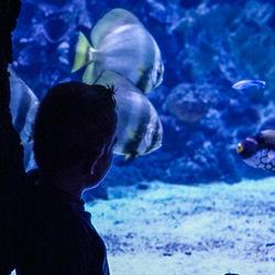 Mooie vissen kijken