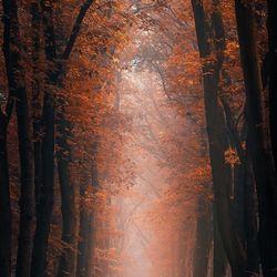 AutumnLane..